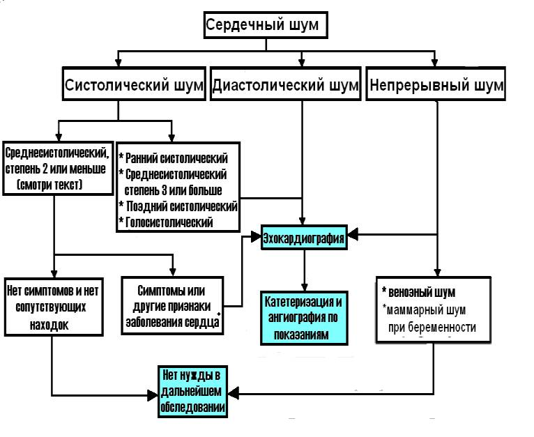 Эхокардиография фото